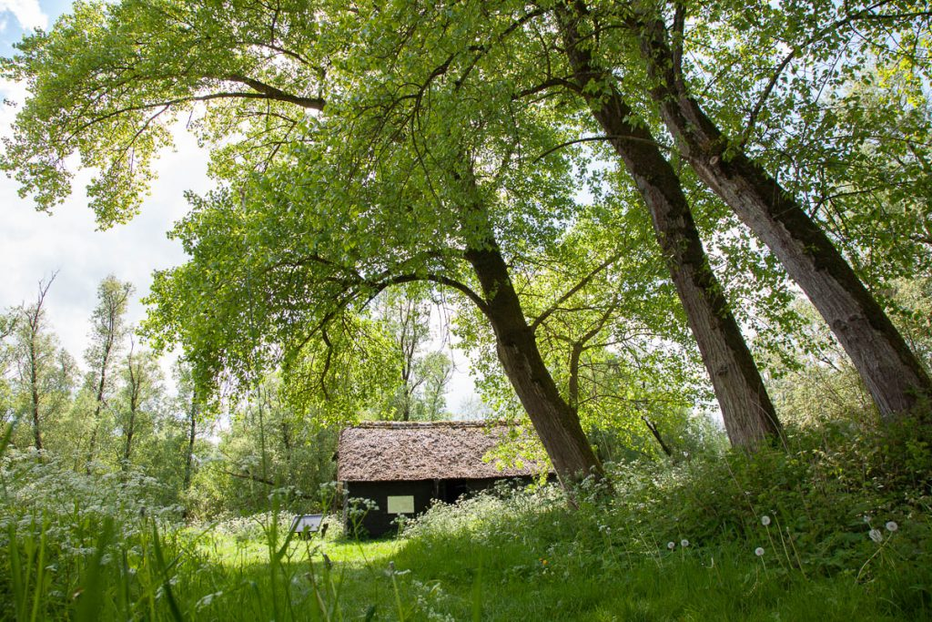 Griendwerkerskeet in de Hollandse Biesbosch
