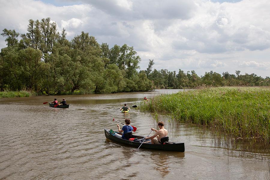 Kanoën in de Brabantse Biesbosch